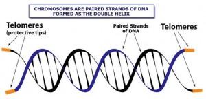 Telomere Science